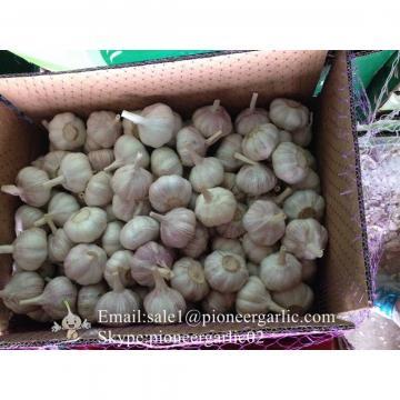 5.0cm Ajo Fresco Blanco Normal Empacado en Cajas de 10kgs Cultivado en China el Origen del Ajo