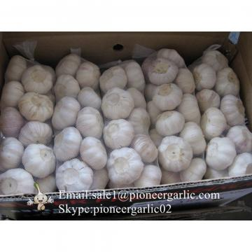 Agroalimentar Ajo Morado Chino Fresco Para Salsa al Ajillo Ingrediente de Ajo Negro