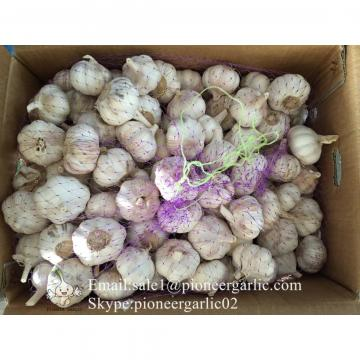 6.0-6.5cm Ajo Fresco Violeta Empacado en Cajas o Mallas de 10kgs Cultivado en China la producción del Ajo