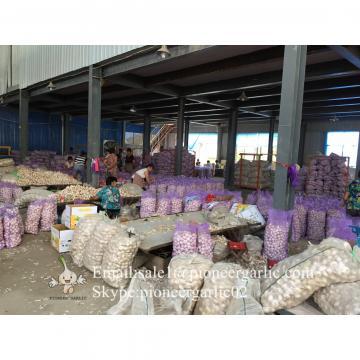 Ajo Blanco Normal Proveniente de Jinxiang Shandong China