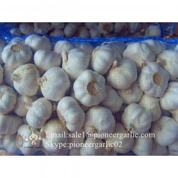 Ajo Blanco Normal Proveniente de Jinxiang Shandong China en Mallas