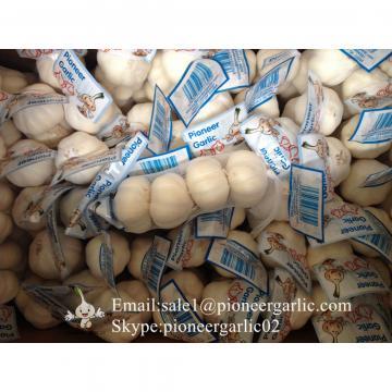 Puro Blanco Ajo Fresco Chino de Jinxiang para el Mercado Hondureño