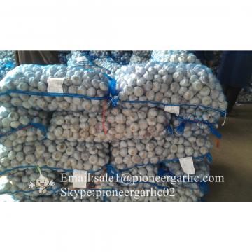 4.5cm Ajo Blanco Normal Fresco Chino Empacado en Mallas de 10kgs