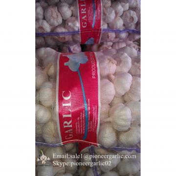 Ajo Gigante Blanco Fresco Chino Usado para Salsa al Ajillo Empacado en Mallas de 10kgs