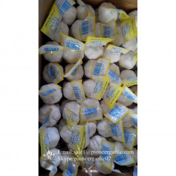100% Puro Blanco Ajo Fresco Chino Cultivado en Jining Shandong China