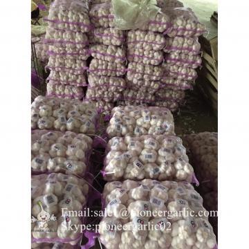5.5cm Ajo Fresco Blanco Normal Empacado en Mallas de 10kgs Cultivado en China el Origen del Ajo