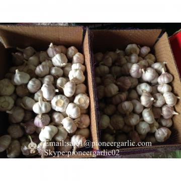 5.5cm Ajo Violeta Fresco Chino Empacado en Cajas de Cartón de 10kgs