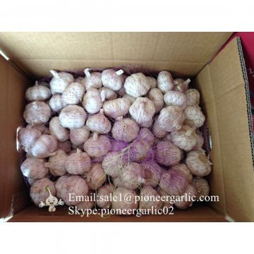 4.5cm Ajo Violeta Fresco Chino Empacado en Cajas de Cartón de 10kgs