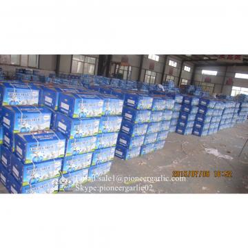 Ajo Chino Empacado en Cajas de Cartón Exportado a Guatemala