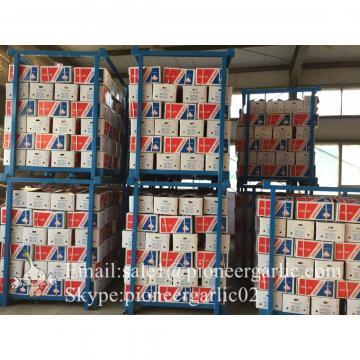 Ajo Blanco Puro Proveniente de Jinxiang Shandong China en Mallas o Cajas de Cartón