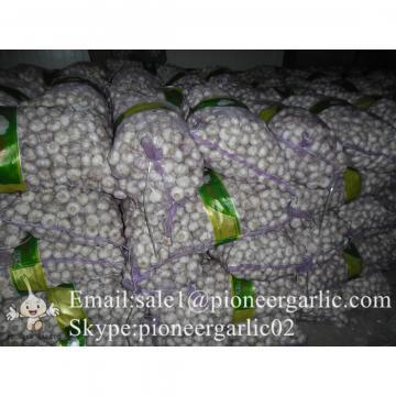 Ajo Blanco Chino de Mejor Calidad Cultivado en Jinxiang Shandong China