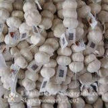Jinxiang Ajo Blanco Puro Producido en Shandong de Mejor Calidad con Precio Favorable