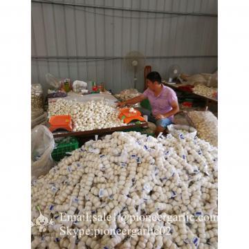 6.0cm Ajo Blanco Puro Fresco Chino Empacado en Mallas de 10kgs