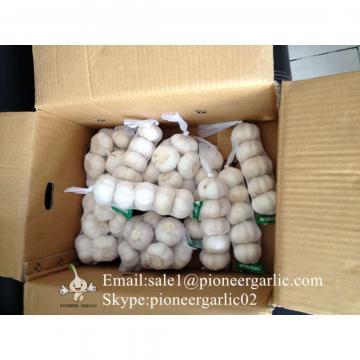 Calibre 5.0cm Puro Blanco Ajo Chino Empacado en Cajas de 5kgs