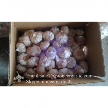 5.0cm Ajo Violeta Fresco Chino Empacado en Cajas de Cartón de 10kgs