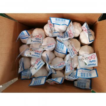 5.5-6.0cm Ajo Blanco Puro Chino con Precio Favorable Exportado de Jinxiang a Centro América