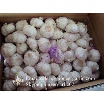 Propiedades del Ajo Castaño Morado Rojo Chino Cultivado en Jinxiang