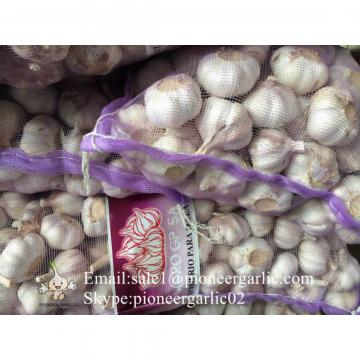 Cultivo del Ajo Chino de Jinxiang Shandong China 4.5cm, 5.5cm Fresco Ajo Material del Ajo Negro