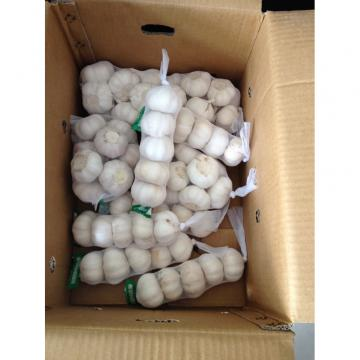 4.5-5cm, 5-5.5cm Ajo Blanco Puro Chino Con Embalaje de Cajas de Cartón