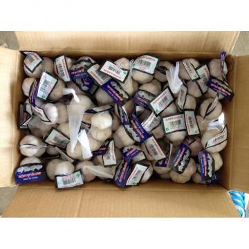5.0-5.5cm, 5.5-6.0cm Ajo Blanco Puro Chino Con Embalaje de Cajas de Cartón