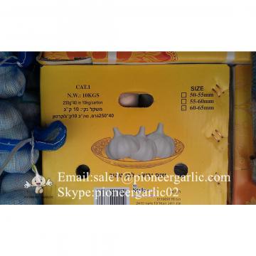 Diente de Ajo Cultivo en Jinxiang de Shandong de 5.5cm Ajo Blanco Puro Empacado en Cajas de 10kgs