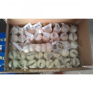 Diente de Ajo Cultivo en Jinxiang de 5.5cm Ajo Blanco Puro Empacado en Mallas de 10kgs