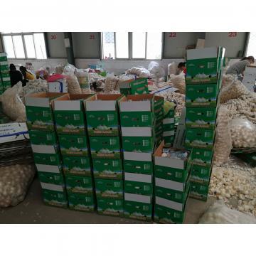 Material de Salsa al Ajillo Recetas con Ajo Violeta Ajos Frescos Chino Cultivo de Ajo en Jinxiang China