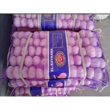 Precios de Ajo Violeta de Varios Tamaños Porducción de Ajos Frescos