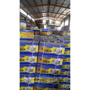 Ajo Blanco Fresco Chino de Precio Favorable Cultivado en Jinxiang Elaborado en la Fábrica de Ajo Ingrediente Ideal para Salsa al Ajillo