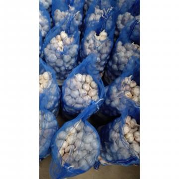 Ajo Blanco Fresco Empacado en Mallas de 10kgs/20kgs para el Mercado Ecuatoriano