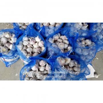 Ajo Rosado Producido en Jinxiang China Ajo Entero