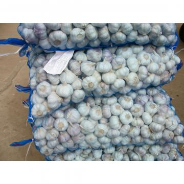 Ajo Violeta Empacado en Mallas de 10kgs Exportado a Ecuador