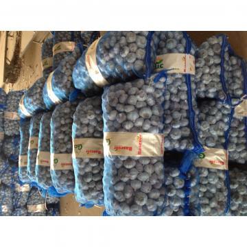 Ajo Puro Castaño Fresco Producido en Jinxiang China Empacado en Mallas de 10kgs y 20kgs