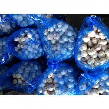 Ajo Exportado a Centro América Enterno Ajo en Polvo