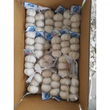 Ajo Blanco Chino Producido en Jinxiang