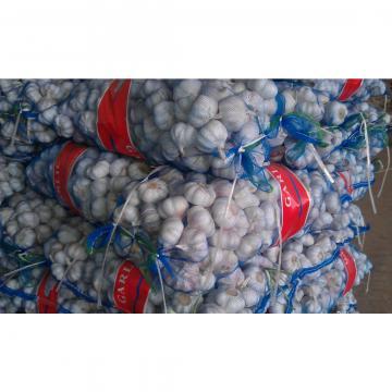 Fábrica del Ajo Chino en JInxiang Precios del Ajo Fresco