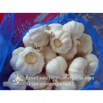 Precios del Ajo Chino Fresco de Calibre 5.5-6.0cm