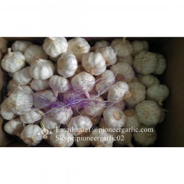 Ajo Morado Granel en Cajas de 10kgs Exportado a Chile