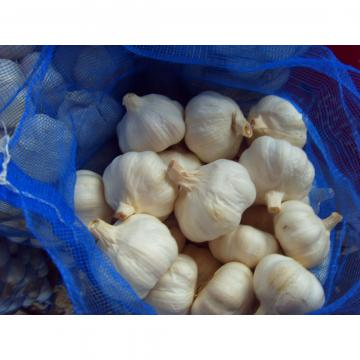 Ajo Castaño Exportado a República Dominicana Empacado en Mallas de 10kgs