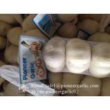 6.0cm Ajo Blanco Puro Fresco Chino Empacado en Cajas de 10kgs