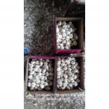 Producto de China Ajo Entero Fresco Ajo Morado Calibre entre 5.0cm y 5.5cm