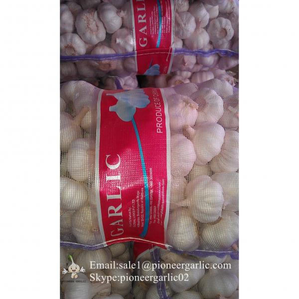 5.0cm Ajo Blanco Normal Fresco Chino Empacado en Mallas de 10kgs #4 image