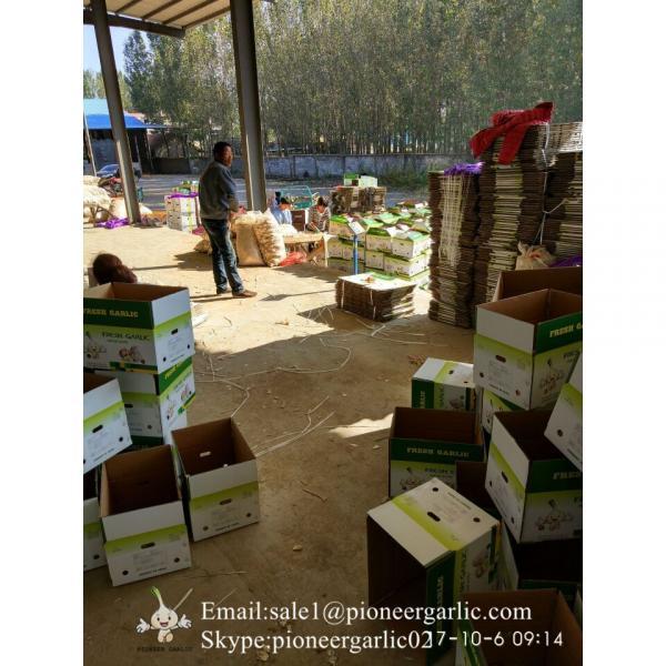 Ajo Fresco Morado Porducido en Fábrica de Jinxiang China Materia Ideal de Ajo Negro NutritivoAjo Normal Blanco Se Exporta a Centro América 5.0-5.5cm Súper Calidad #4 image