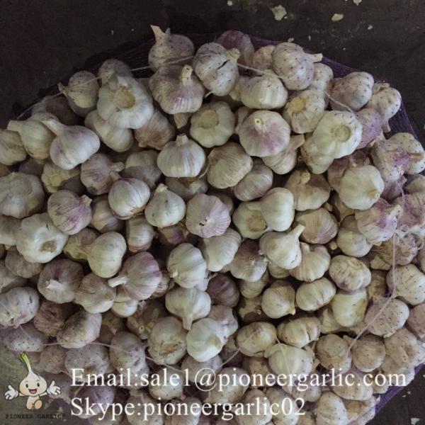 Ajo Fresco Morado Porducido en Fábrica de Jinxiang China Materia Ideal de Ajo Negro NutritivoAjo Normal Blanco Se Exporta a Centro América 5.0-5.5cm Súper Calidad #1 image