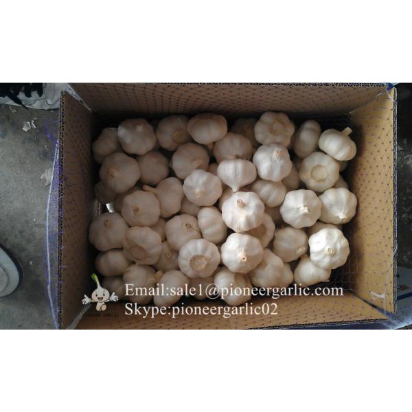 Ajo Fresco Morado Porducido en Fábrica de Jinxiang China Materia Ideal de Ajo Negro NutritivoAjo Normal Blanco Se Exporta a Centro América 5.0-5.5cm Súper Calidad #2 image